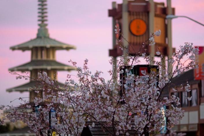spring san francisco chinatown